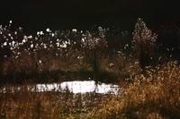 夕暮れの湿地.JPG