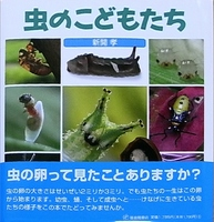 虫の子供たち.JPG