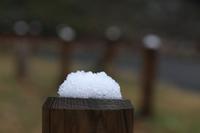 雪0217.JPG