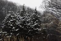 雪1-0217.JPG