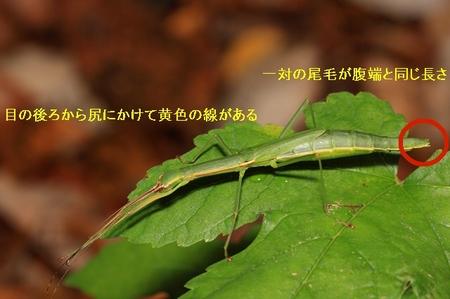 nihonntobi.JPG